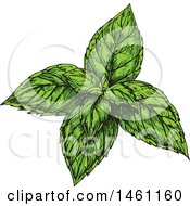 Clipart Of Sketched Peppermint Royalty Free Vector Illustration