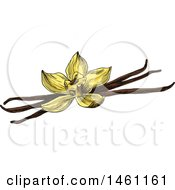 Clipart Of A Sketched Vanilla Flower And Pods Royalty Free Vector Illustration