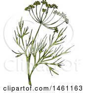 Clipart Of A Sketched Dill Sprig Royalty Free Vector Illustration