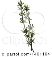 Clipart Of A Sketched Thyme Sprig Royalty Free Vector Illustration