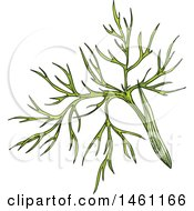 Clipart Of A Sketched Cumin Sprig Royalty Free Vector Illustration