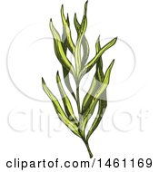 Clipart Of A Sketched Tarragon Sprig Royalty Free Vector Illustration