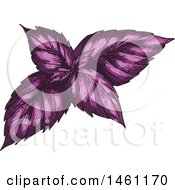 Clipart Of Sketched Red Or Purple Basil Royalty Free Vector Illustration