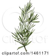 Clipart Of A Sketched Rosemary Sprig Royalty Free Vector Illustration