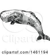 Sketched Sperm Whale