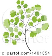 Clipart Of A Maiden Hair Fern Plant Royalty Free Vector Illustration