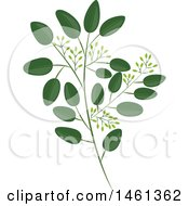 Clipart Of A Seeded Eucalyptus Branch Royalty Free Vector Illustration