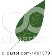Clipart Of A Green Eucalyptus Leaf Royalty Free Vector Illustration