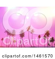 Pink Sunset Sky Over Tropical Palm Trees