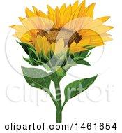 Poster, Art Print Of Sunflower Head