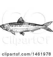 Sketched Black And White Sardine Fish