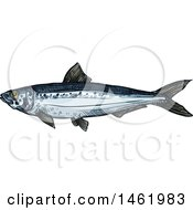 Clipart Of A Sketched Sardine Fish Royalty Free Vector Illustration