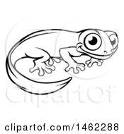 Black And White Newt Or Salamander