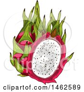 Clipart Of A Sketched Dragonfruit Royalty Free Vector Illustration by Vector Tradition SM