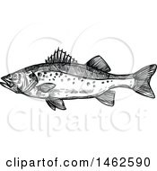 Clipart Of A Sketched Black And White Fish Royalty Free Vector Illustration
