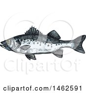 Clipart Of A Sketched Fish Royalty Free Vector Illustration