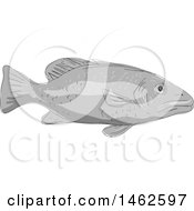 Grayscale Schoolmaster Snapper Fish In Drawing Sketch Style