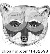 Grayscale Racoon Face In Drawing Sketch Style