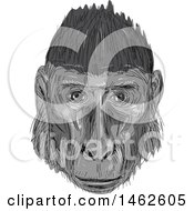 Grayscale Crested Black Macaque Monkey Face In Drawing Sketch Style