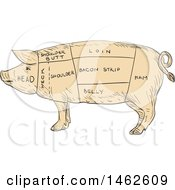 Pig Profile Showing Cuts Of Meat In Drawing Sketch Style