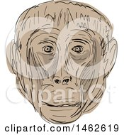 Tan Gelada Monkey Face In Drawing Sketch Style