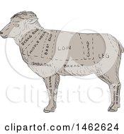 Poster, Art Print Of Lamb Profile Showing Cuts Of Meat In Drawing Sketch Style