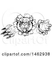 Clipart Of A Black And White Vicious Roaring Panther Monster Mascot Shredding Through A Wall With A Basketball Royalty Free Vector Illustration by AtStockIllustration