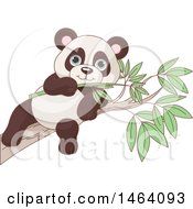 Clipart Of A Cute Baby Panda Eating On A Eucalyptus Branch Royalty Free Vector Illustration