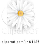 Clipart Of A White Daisy Background Or Business Card Design Royalty Free Vector Illustration