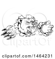 Clipart Of A Black And White Vicious Bear Mascot Slashing Through A Wall With A Cricket Ball In A Paw Royalty Free Vector Illustration