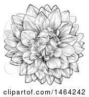 Poster, Art Print Of Black And White Dahlia Or Chrysanthemum Flower In Woodcut Style