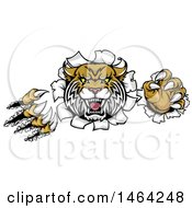 Clipart Of A Vicious Wildcat Mascot Shredding Through A Wall Royalty Free Vector Illustration by AtStockIllustration