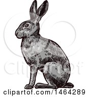 Clipart Of A Sketched Rabbit Royalty Free Vector Illustration