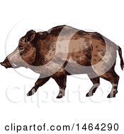 Clipart Of A Sketched Boar Royalty Free Vector Illustration by Vector Tradition SM