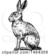 Clipart Of A Sketched Black And White Rabbit Royalty Free Vector Illustration