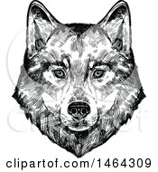 Sketched Black And White Wolf Face
