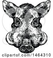 Clipart Of A Sketched Black And White Boar Royalty Free Vector Illustration
