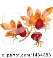 Clipart Of Leaves And Rose Hips Royalty Free Vector Illustration by Vector Tradition SM
