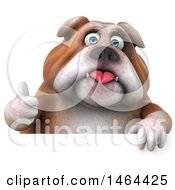 Clipart Of A 3d Bill Bulldog Mascot Giving A Thumb Up Over A Sign On A White Background Royalty Free Illustration