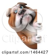 3d Bill Bulldog Mascot Looking Around A Sign On A White Background