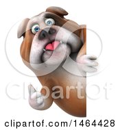 3d Bill Bulldog Mascot Giving A Thumb Up Around A Sign On A White Background