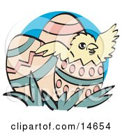 Cute Baby Chick Hatching Out Of A Decorated Easter Egg Clipart Illustration