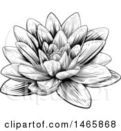 Vintage Black And White Engraved Or Woodcut Blooming Waterlily Lotus Flower