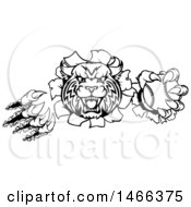 Clipart Of A Black And White Vicious Wildcat Mascot Shredding Through A Wall With A Baseball Royalty Free Vector Illustration by AtStockIllustration