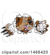 Poster, Art Print Of Vicious Aggressive Bear Mascot Slashing Through A Wall With A Baseball In A Paw