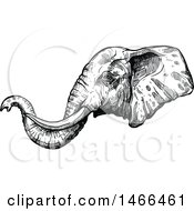 Clipart Of A Sketched Black And White Elephant Head In Profile Royalty Free Vector Illustration by Vector Tradition SM