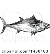 Sketched Black And White Tuna Fish