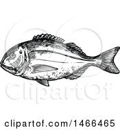 Sketched Black And White Gilt Head Bream Fish