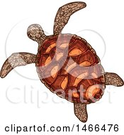 Sketched Sea Turtle