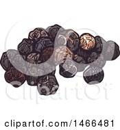 Clipart Of A Sketched Spice Peppercorns Royalty Free Vector Illustration